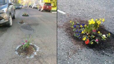 Photo of Να φυτεύουμε λουλούδια στις λακκούβες των δρόμων;