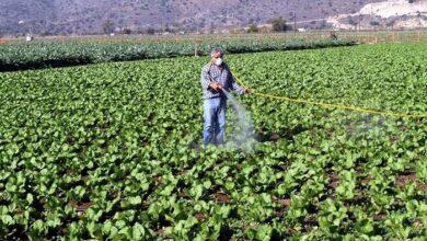 Photo of Κορωνοϊός : Μεγάλος κίνδυνος για ελλείψεις τροφίμων και ανατιμήσεις