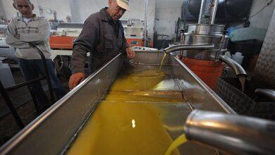Photo of Κατ' αποκοπή ενίσχυση σε 145.000 ελαιοπαραγωγούς για τον κορωνοϊό