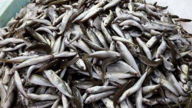 Photo of Τα ψάρια των ελληνικών θαλασσών είναι πηγή πολλών βιταμινών
