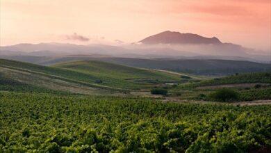 Photo of Παγκόσμια παραγωγή οίνου 2019: Μειωμένη κατά 10% σε σχέση με την περασμένη χρονιά