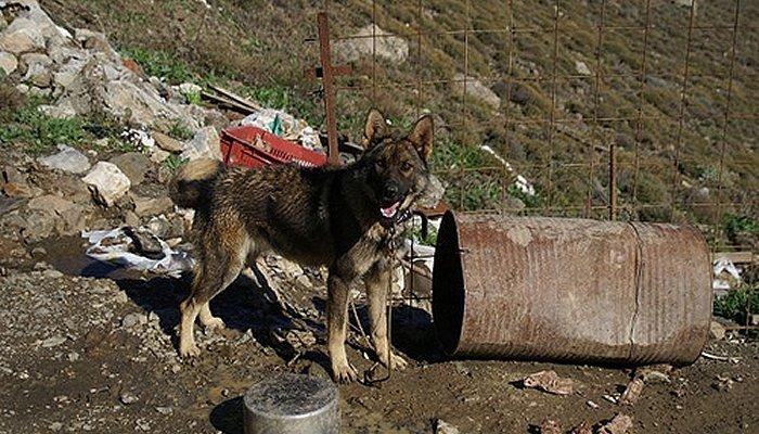 «Βαρελόσκυλα»: Πρέπει να σώσουμε αυτές τις ψυχές όπου κι αν τις δούμε 8