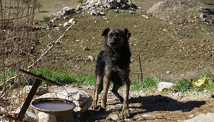 «Βαρελόσκυλα»: Πρέπει να σώσουμε αυτές τις ψυχές όπου κι αν τις δούμε 6