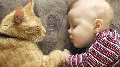 Photo of Τοξοπλάσμωση: Τελικά υπάρχει κίνδυνος να κολλήσουμε από τη γάτα;