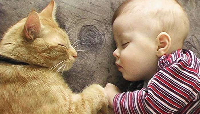 kid by cat