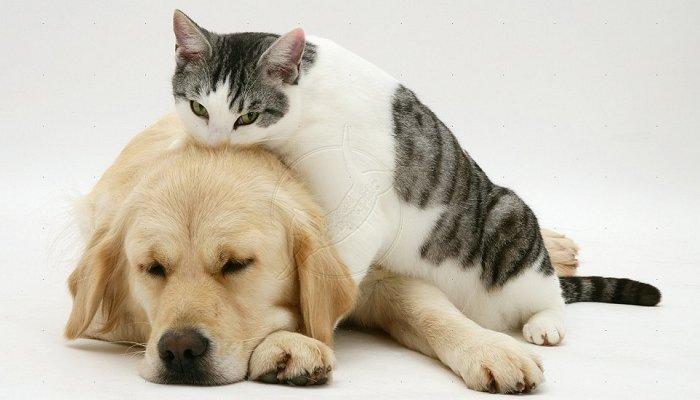 dog cat