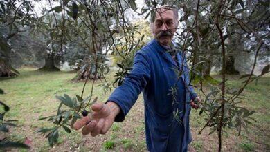 Photo of Politico: Η Ελλάδα αδυνατεί να δρέψει τον πλούτο από το λάδι της