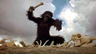 Photo of Διαθέτουν άραγε τα ζώα τεχνολογία; (του Κώστα Θεολόγου)