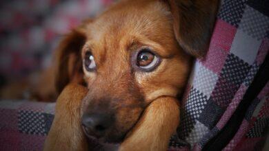 Photo of Πολύ υψηλά τα ποσοστά κακοποίησης ζώων στην Ελλάδα