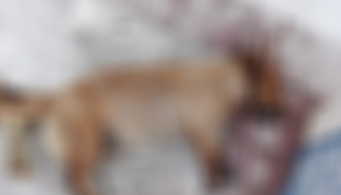 Ηράκλειο: 75χρονη γέμισε με φόλες την περιοχή του Αρκαλοχωρίου - Δυο σκυλιά νεκρά 1