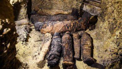 Photo of Αίγυπτος: Βρέθηκαν 50 μούμιες από την εποχή των Πτολεμαίων