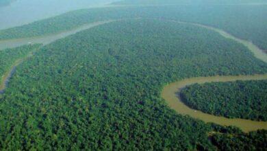 Photo of Kίνα και Ινδία δενδροφύτευσαν έκταση όσο το δάσος του Αμαζονίου μέσα σε δύο δεκαετίες