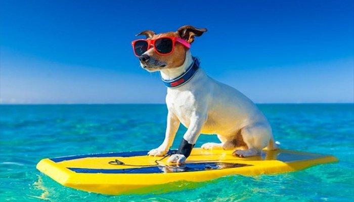 dog sea