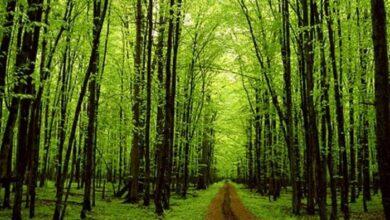 Photo of IUCN: Το 40% των δένδρων στην Ευρώπη απειλούνται με εξαφάνιση