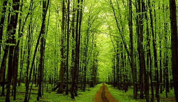 IUCN: Το 40% των δένδρων στην Ευρώπη απειλούνται με εξαφάνιση 1