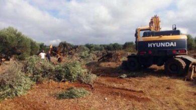 Photo of Καστέλλι: Ξεριζώνουν ελαιόδεντρα για το νέο αεροδρόμιο – Αντιδράσεις κατοίκων