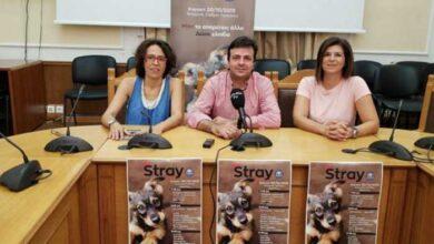 Photo of Ηράκλειο: «Stray Action» – Δράσεις για τα αδέσποτα