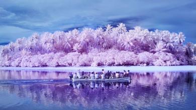 Photo of Πίντζλαπ: Το νησί της αχρωματοψίας (videos)