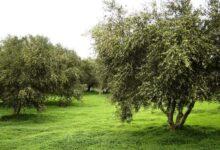 Photo of Το κύτταρο της αγροτικής οικονομίας (του Μάνου Κοκκινέλη)