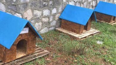 Photo of Πιερία: Σπιτάκια για τα αδεσποτάκια – Μια συγκινητική πρωτοβουλία του Δήμου Δίου Ολύμπου