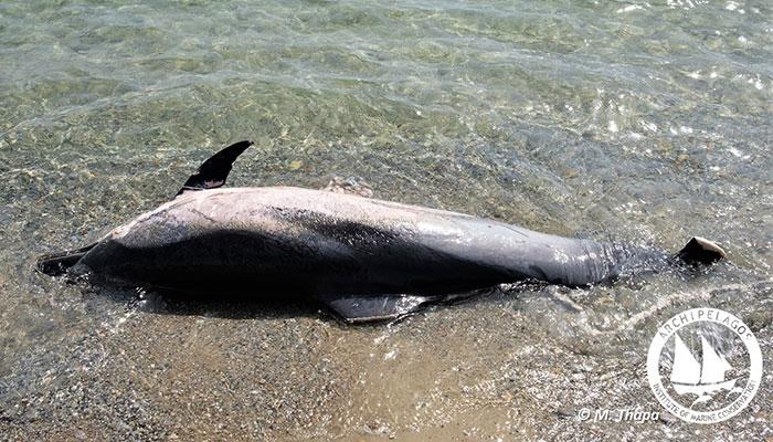 nekro delfini 3