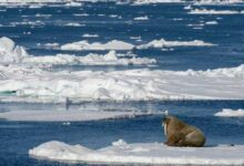 Photo of Φέτος έλιωσε η μεγαλύτερη ποσότητα πάγου της Αρκτικής από το 1979