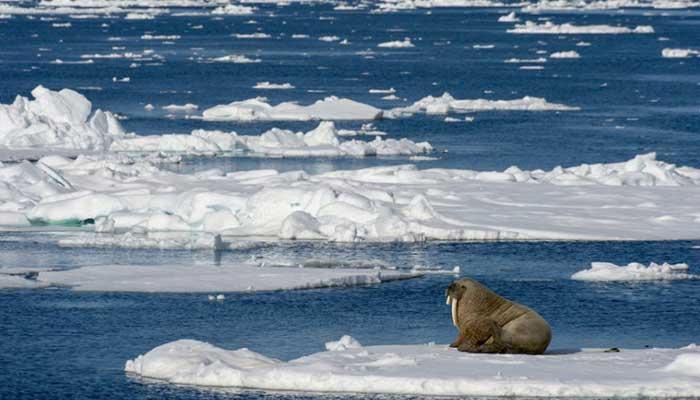 arctic siberia
