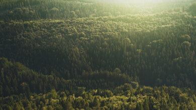 dasos forest