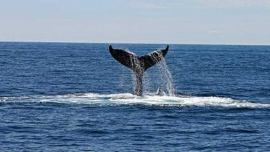 Photo of Μάνη, Πελ/σος: Φάλαινα 20 μέτρων κολυμπούσε δίπλα από φουσκωτό