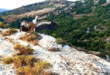 Photo of Κρήτη: Επέστρεψαν ξανά προς την ελευθερία τρία άγρια πουλιά