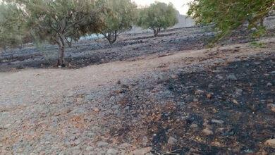 Photo of Χωρίς ενεργό μέτωπο η φωτιά στη Σητεία