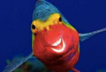Photo of Τα άγρια ζώα στις πιο αστείες φωτογραφίες τους (pics)