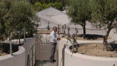 Photo of Κρήτη: Τεχνητή νοημοσύνη και αισθητήρες στην καλλιέργεια της ελιάς (video)