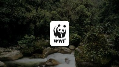 Photo of WWF: Η φύση καταρρέει – Απειλεί την επιβίωση του ανθρώπου