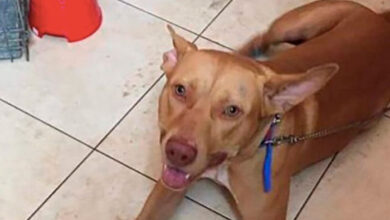 Photo of Χανιά: Αφέθηκε ελεύθερος ο άνδρας που κακοποίησε τον σκύλο του