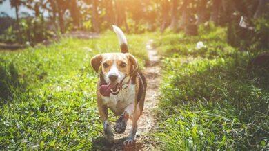Photo of Σκύλος που είχε χαθεί περπάτησε πάνω από 59 χλμ για να βρει την οικογένειά του